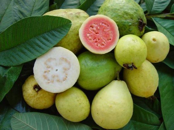 FrutiTalpa 5 Rollo de Guayaba 0.050gr (Guava Sweet Roll)